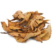 horse-chestnut-leaves-brown-25x
